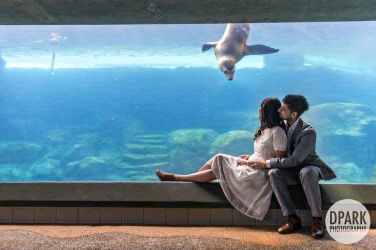 best-creative-aquarium-long-beach-engagement-photographer